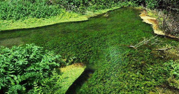 """Riserva Naturale Oasi WWF """"Gole del Sagittario"""" Anversa degli Abruzzi"""